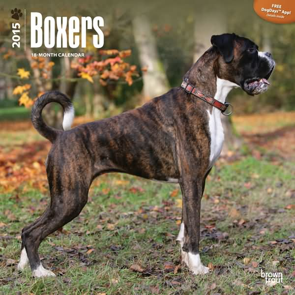 Boxers @ DogBreed-Gifts.com - Boxer Calendars